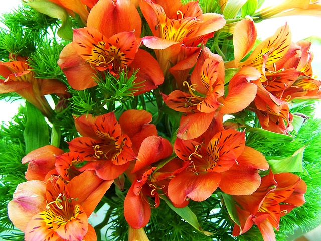 Order freesia flowers from uk florists